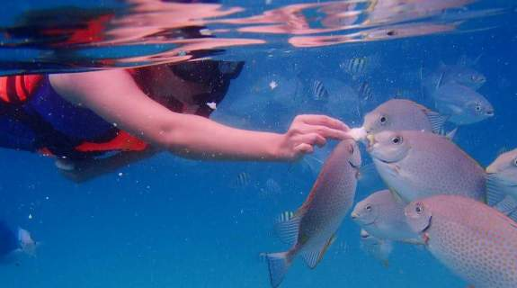 Snorkeling in Coral Island