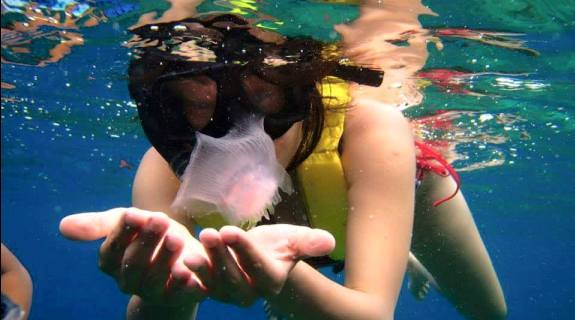 Snorkeling with Jelly Fish in Tioman